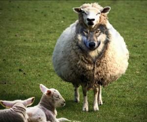 False Teaching and False Teachers 2 <br/> Sunil Abraham