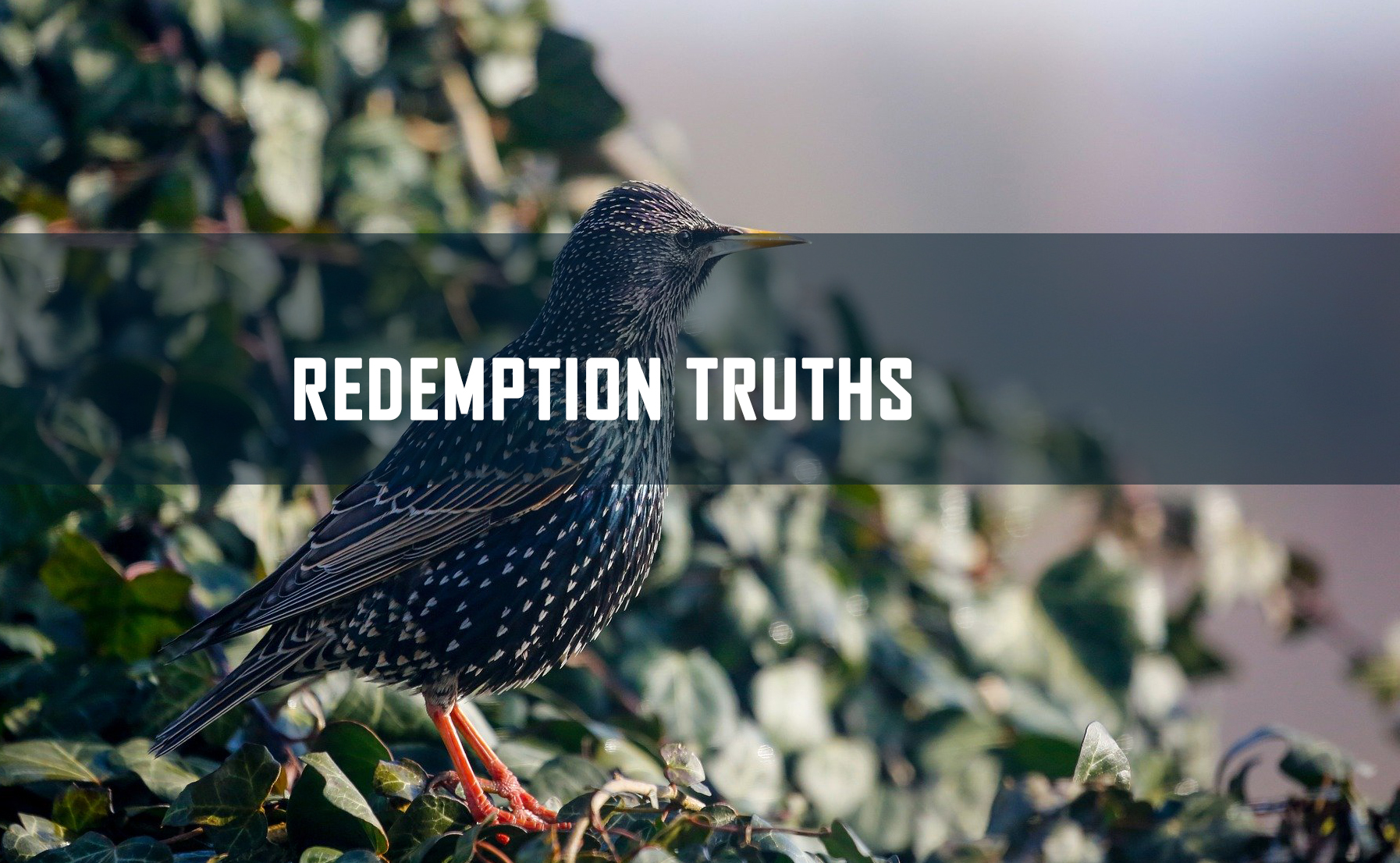 Redemption Truths <br/> Sujith M John